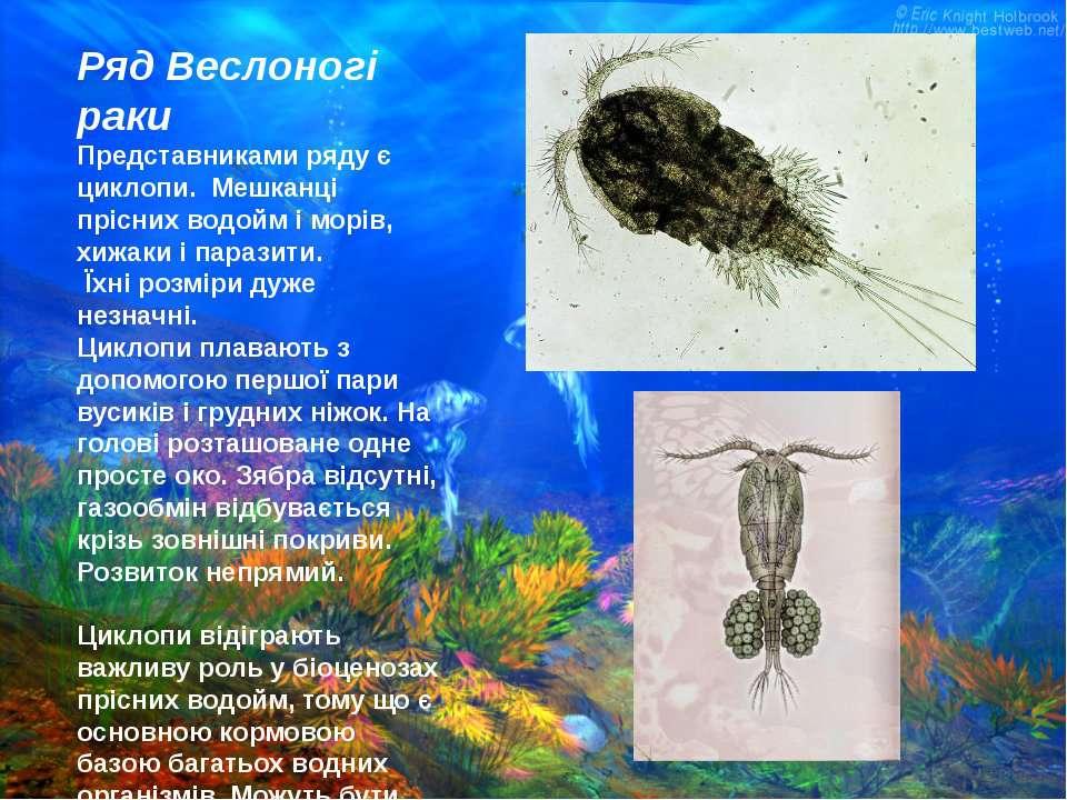 Ряд Веслоногі раки Представниками ряду є циклопи. Мешканці прісних водойм і м...