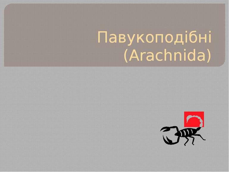 Павукоподібні (Arachnida)