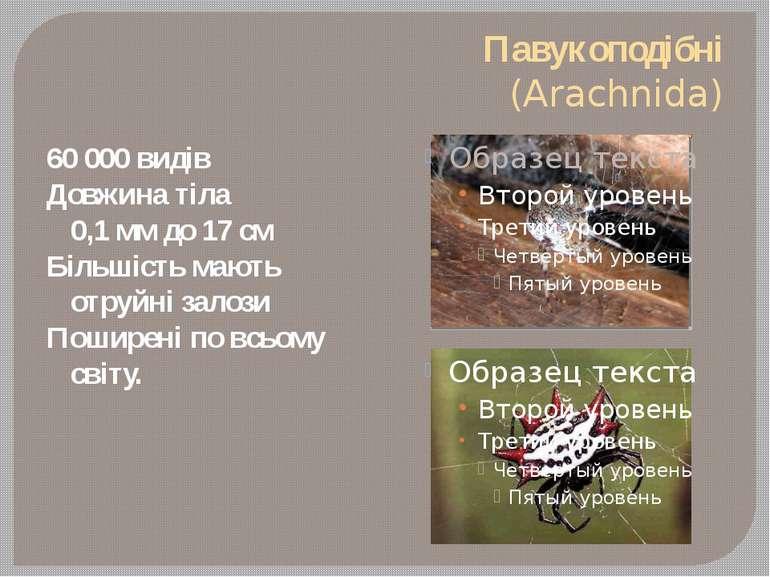 Павукоподібні (Arachnida) 60 000 видів Довжина тіла 0,1 мм до 17 см Більшість...
