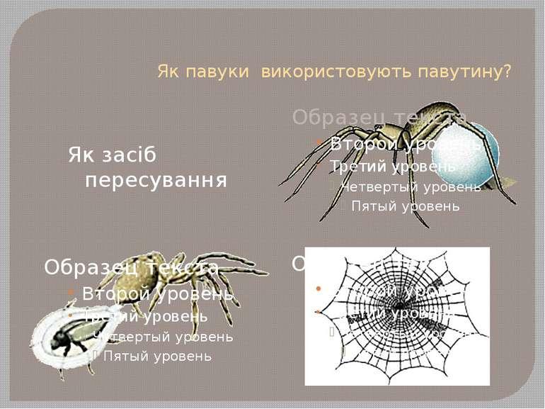 Як павуки використовують павутину? Як засіб пересування