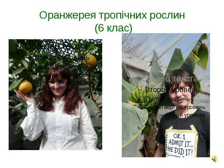 Оранжерея тропічних рослин (6 клас)