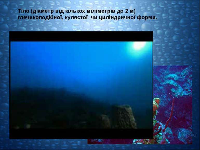 Тіло (діаметр від кількох міліметрів до 2 м) глечикоподібної, кулястої чи цил...