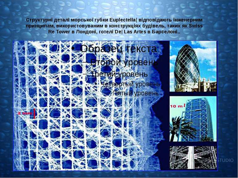 Структурні деталі морської губки Euplectella| відповідають інженерним принцип...