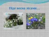 Піде весна лісами…