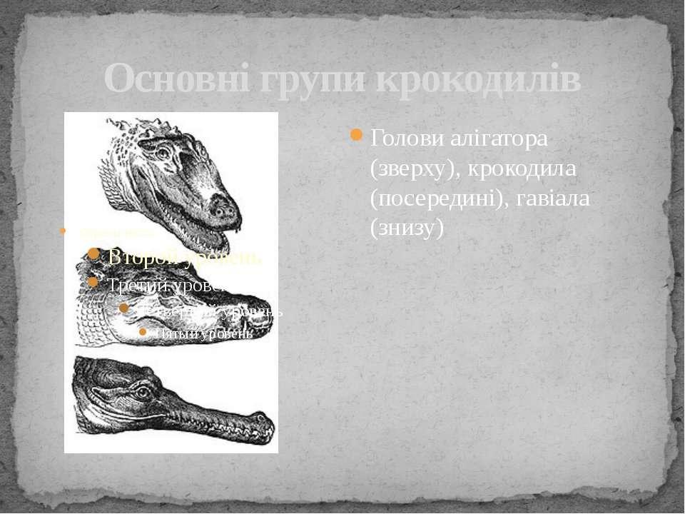 Основні групи крокодилів Голови алігатора (зверху), крокодила (посередині), г...