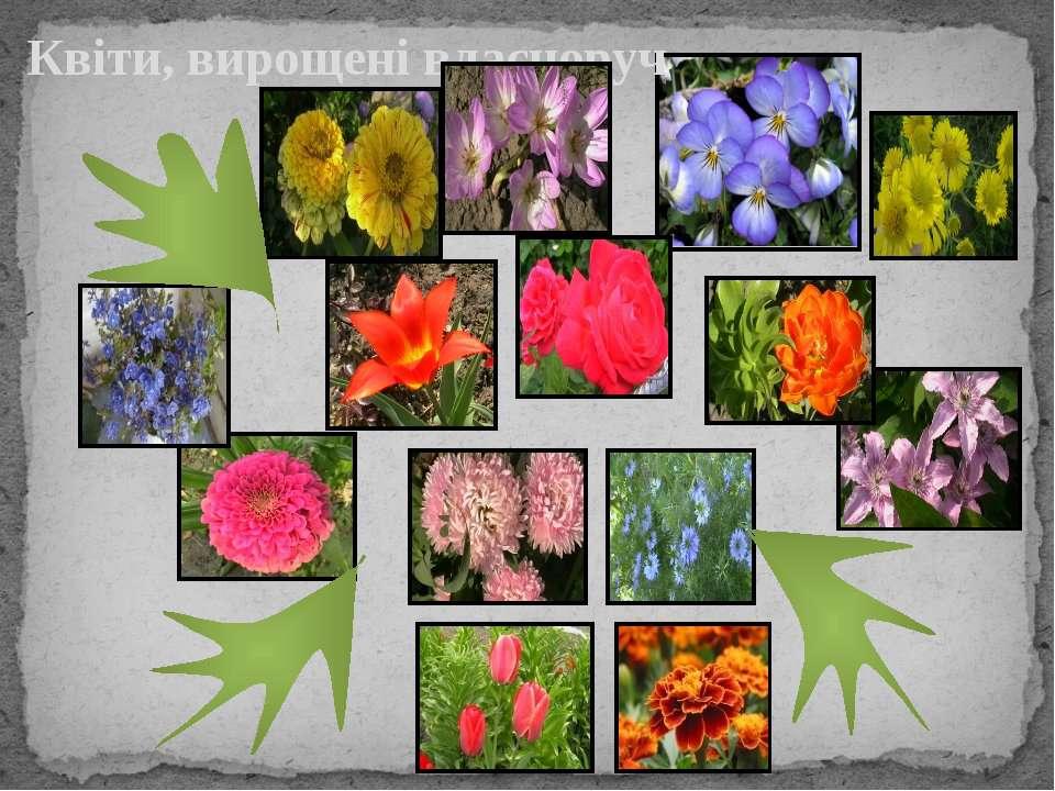 Квіти, вирощені власноруч