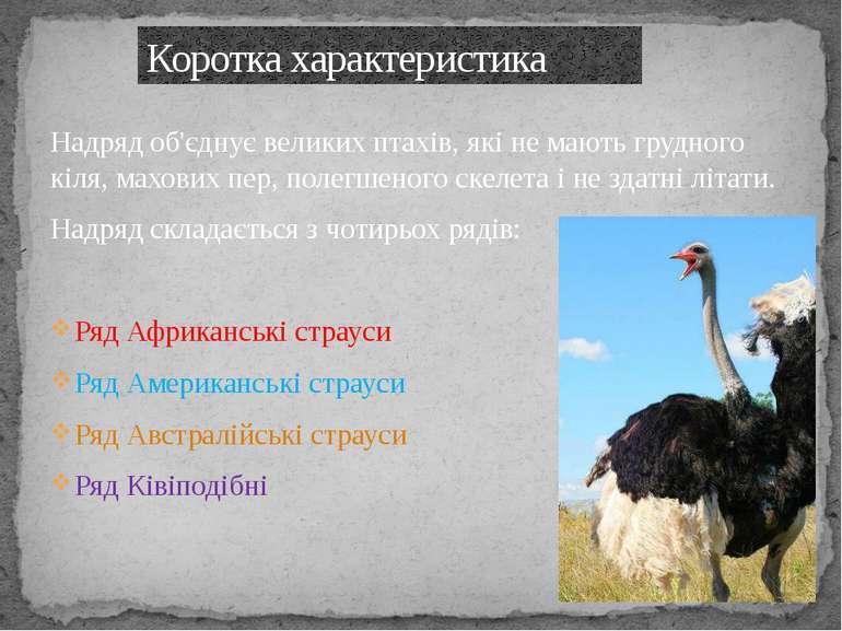 Надряд об'єднує великих птахів, які не мають грудного кіля, махових пер, поле...