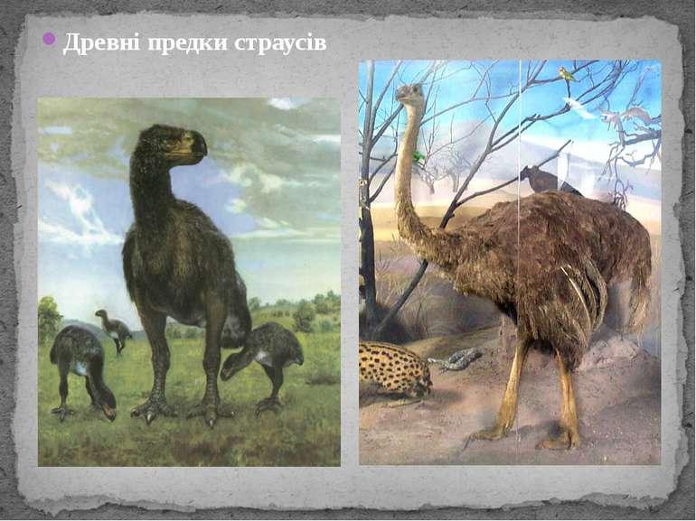 Древні предки страусів
