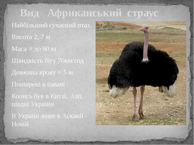 Найбільший сучасний птах. Висота 2, 7 м Маса = до 90 кг Швидкість бігу 70км/г...