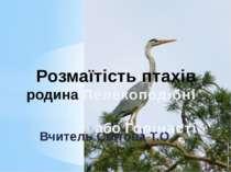 Вчитель Світова Т.О. Розмаїтість птахів родина Лелекоподібні або Голінасті
