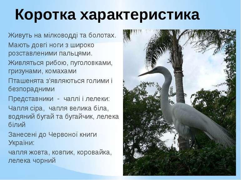 Коротка характеристика Живуть на мілководді та болотах. Мають довгі ноги з ши...