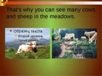 That's why you can see many cows and sheep in the meadows.
