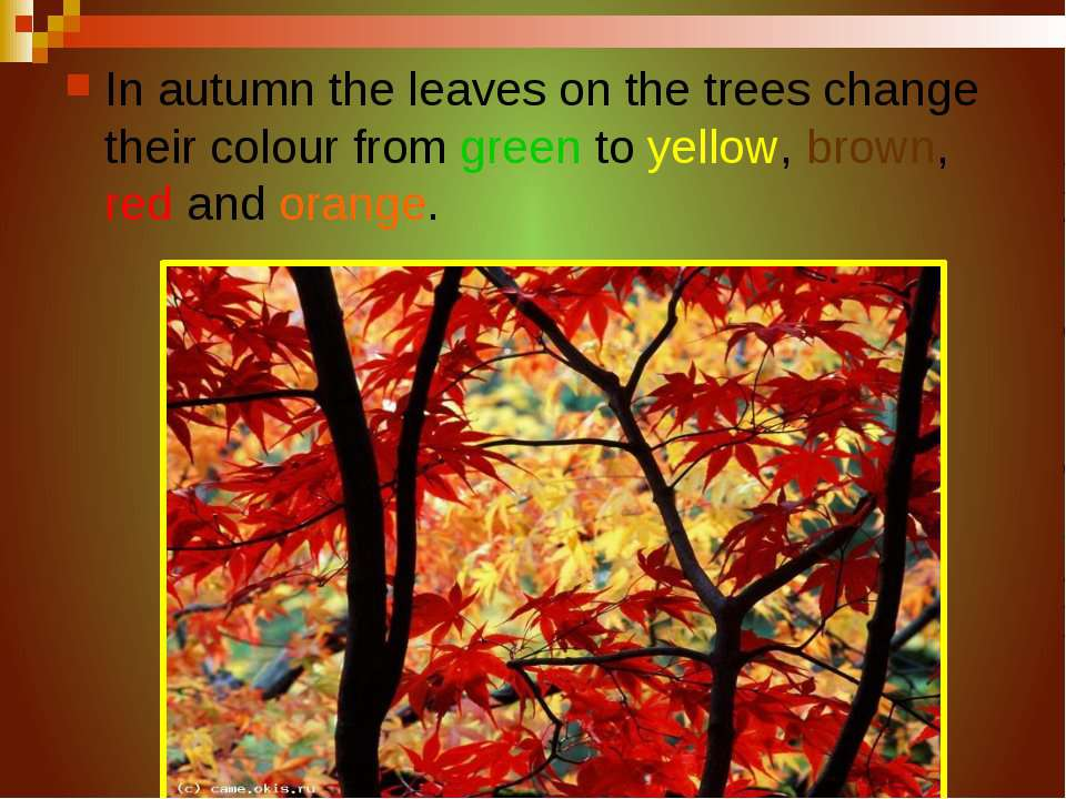 In autumn the leaves on the trees change their colour from green to yellow, b...