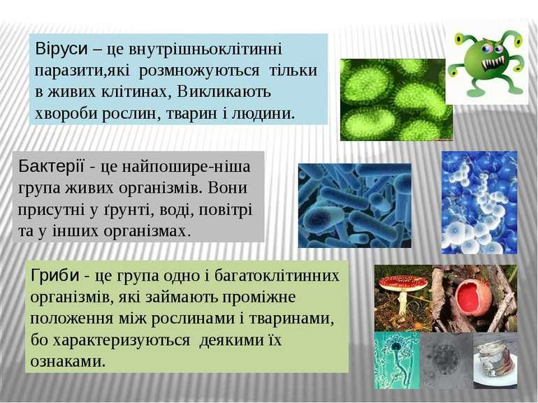 Віруси – це внутрішньоклітинні паразити,які розмножуються тільки в живих кліт...