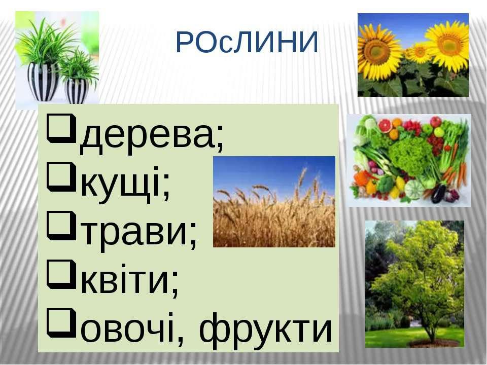 РОсЛИНИ дерева; кущі; трави; квіти; овочі, фрукти