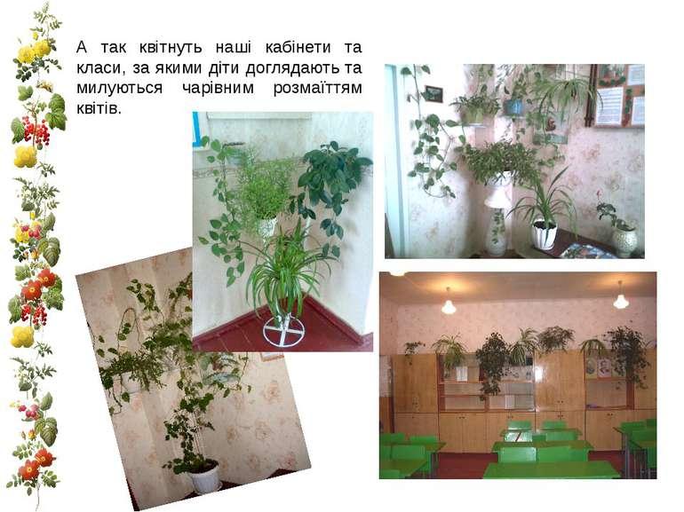 А так квітнуть наші кабінети та класи, за якими діти доглядають та милуються ...