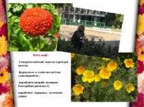 Мета акції : Створити квіткові зони на території школи; формувати в учнів еко...