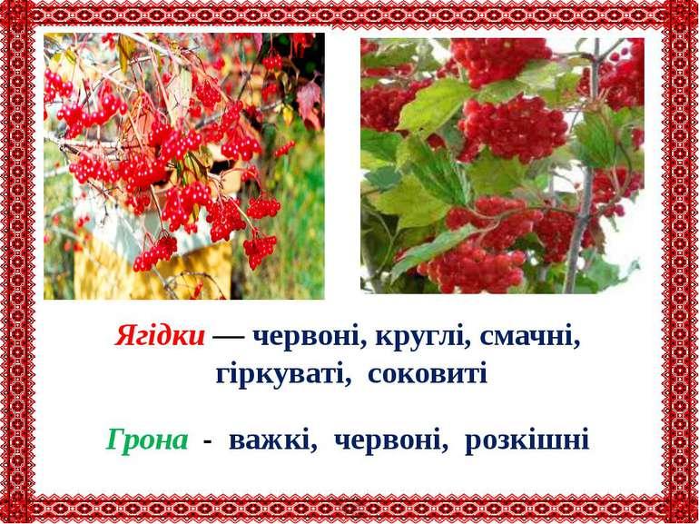 Ягідки — червоні, круглі, смачні, гіркуваті, соковиті Грона - важкі, червоні,...