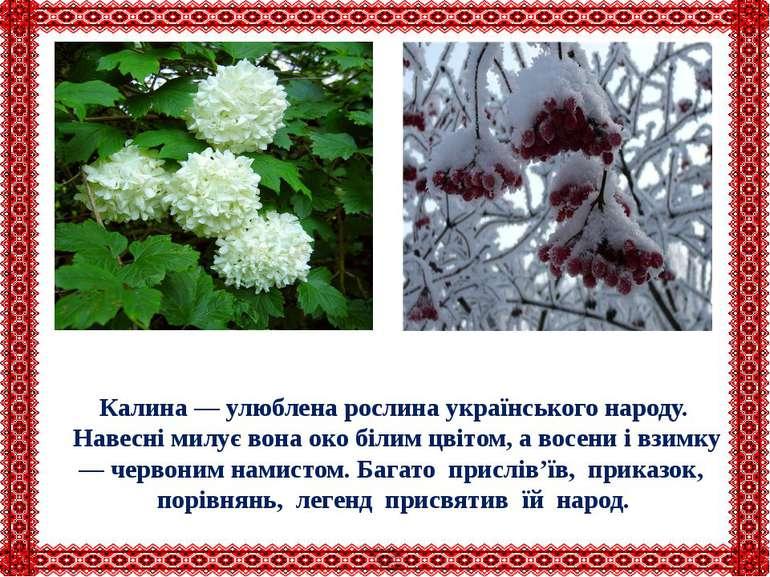 Калина — улюблена рослина українського народу. Навесні милує вона око білим ц...