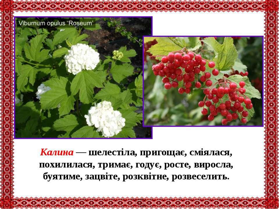 Калина — шелестіла, пригощає, сміялася, похилилася, тримає, годує, росте, вир...