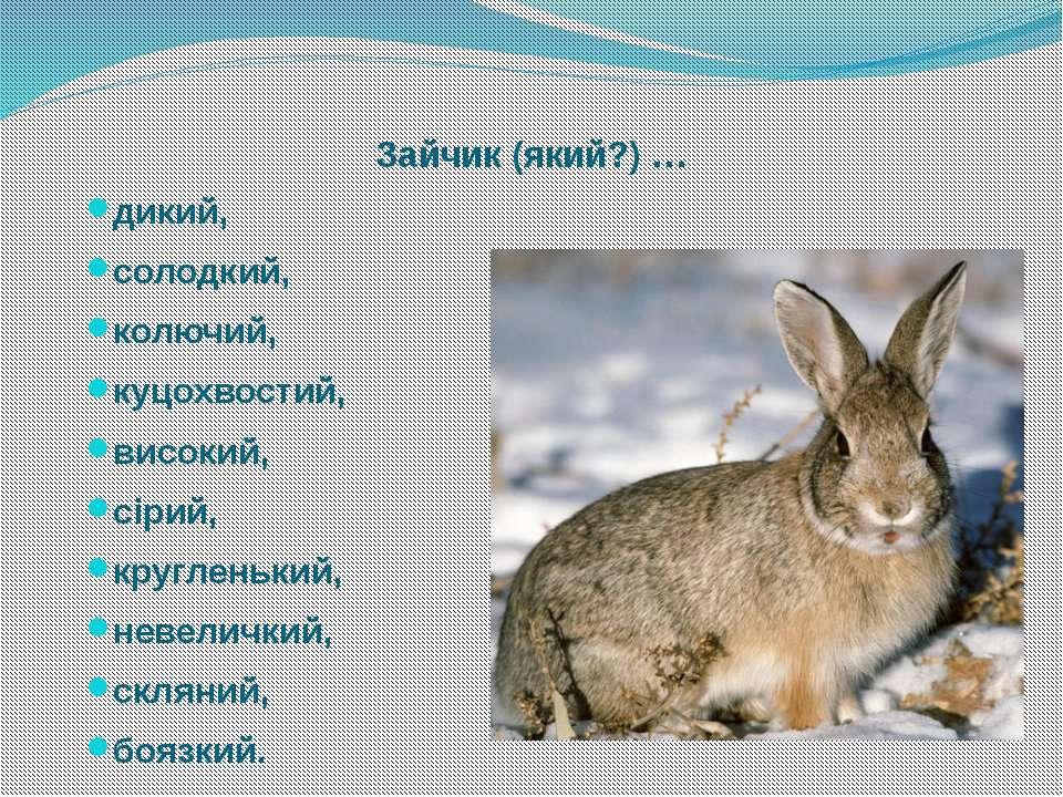 Зайчик (який?) … дикий, солодкий, колючий, куцохвостий, високий, сірий, кругл...