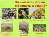 Чи знаєте ви птахів, які живуть в Україні? зозуля дрімлюга жовтобровий вівчар...
