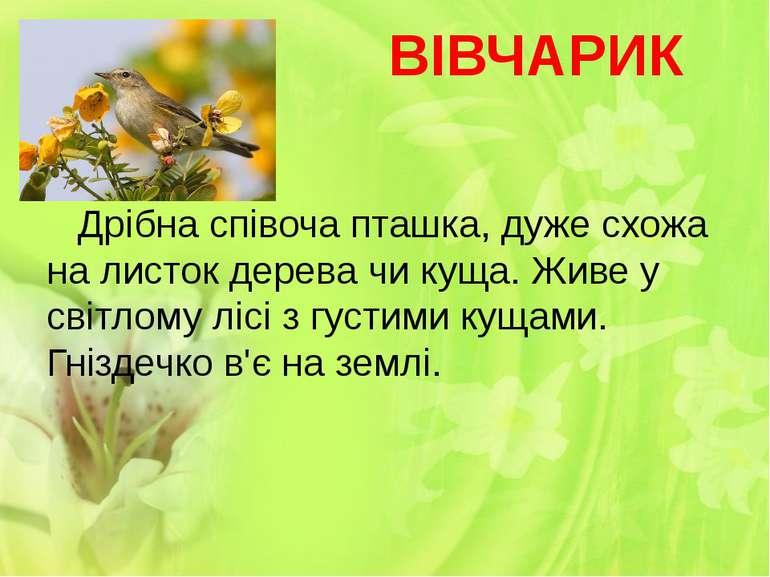 ВІВЧАРИК Дрібна співоча пташка, дуже схожа на листок дерева чи куща. Живе у с...