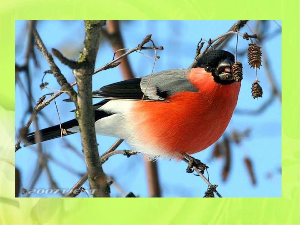 Крізь зимові заметілі В сад наш птахи прилетіли. Та такі червоногруді, Ніби я...