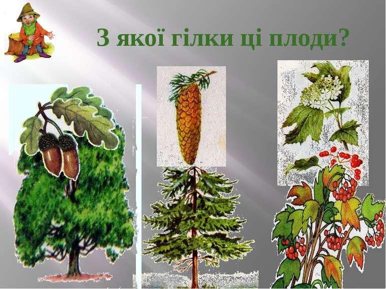 З якої гілки ці плоди?