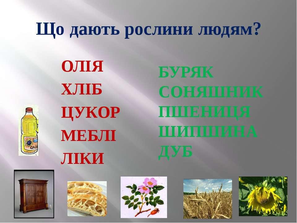 Що дають рослини людям? ОЛІЯ ХЛІБ ЦУКОР МЕБЛІ ЛІКИ БУРЯК СОНЯШНИК ПШЕНИЦЯ ШИП...