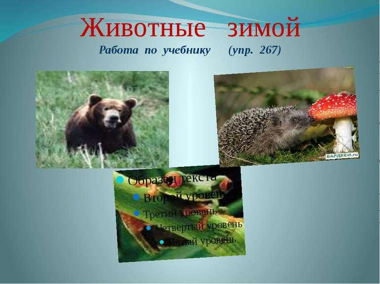 Животные зимой Работа по учебнику (упр. 267)