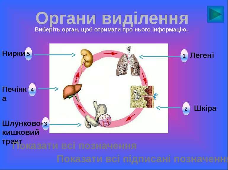 1 5 4 3 2 Органи виділення Легені Шкіра Шлунково-кишковий тракт Печінка Нирки...