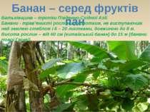 Банан – серед фруктів пан Батьківщина – тропіки Південно-Східної Азії. Банани...