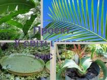 Проект: У світі цікавих листків