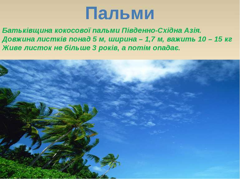Пальми Батьківщина кокосової пальми Південно-Східна Азія. Довжина листків пон...