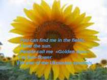 You can find me in the fields. I love the sun. People call me «Golden Sun». I...
