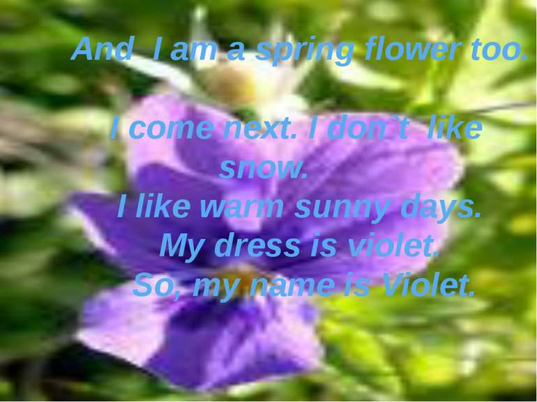 And I am a spring flower too. I come next. I don`t like snow. I like warm sun...
