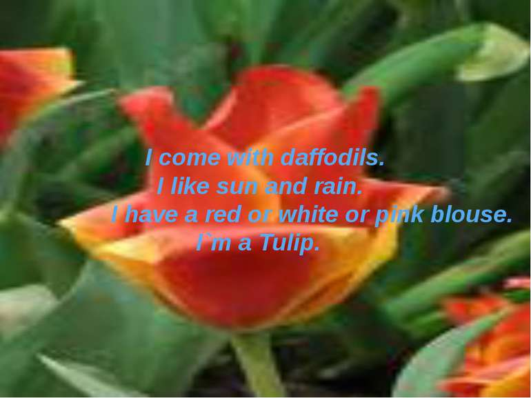 I come with daffodils. I like sun and rain. I have a red or white or pink blo...