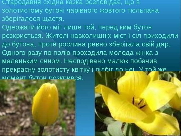 Стародавня східна казка розповідає, що в золотистому бутоні чарівного жовтого...