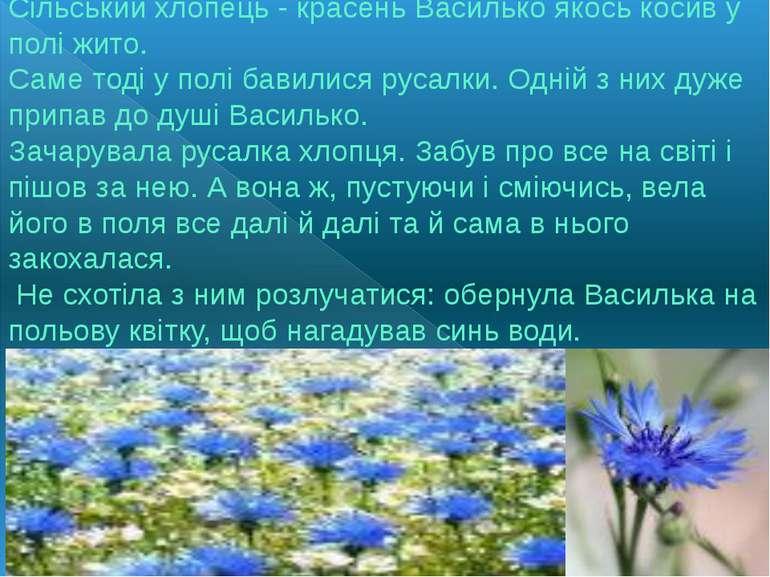 Сільський хлопець - красень Василько якось косив у полі жито. Саме тоді у пол...
