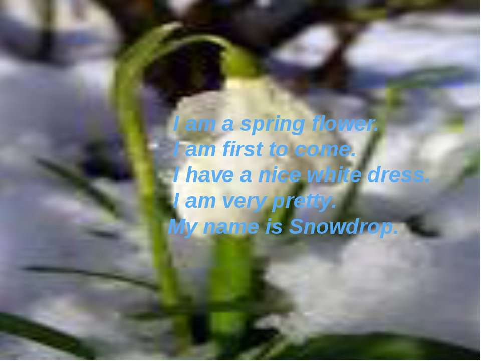 I am a spring flower. I am first to come. I have a nice white dress. I am ver...