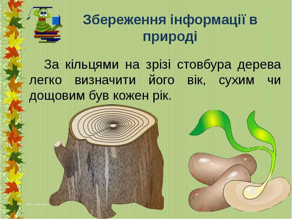 Збереження інформації в природі За кільцями на зрізі стовбура дерева легко ви...