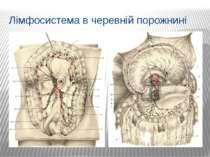 Лімфосистема в черевній порожнині