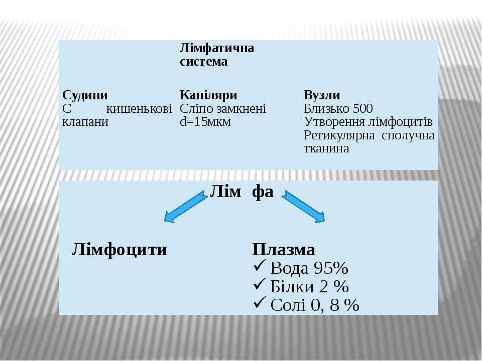 Лімфатична система   Судини Єкишенькові клапани Капіляри Сліпо замкнені d...