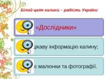 Білий цвіт калини – радість України