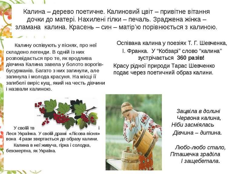 Калина– дерево поетичне. Калиновий цвіт – привітне вітання дочки до матері. ...