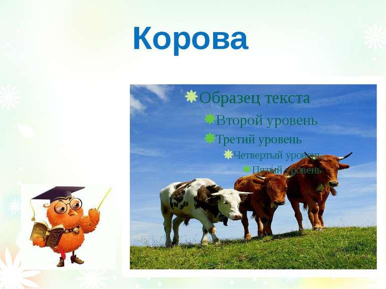 Корова Вознюк Тетяна Василівна