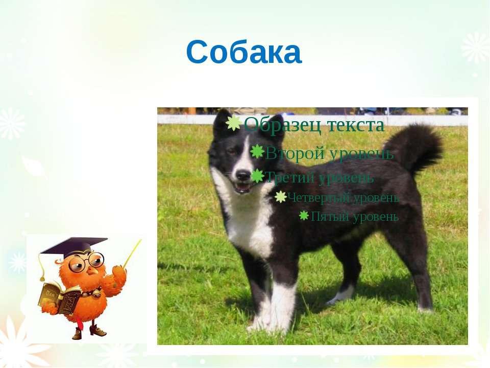 Собака Вознюк Тетяна Василівна