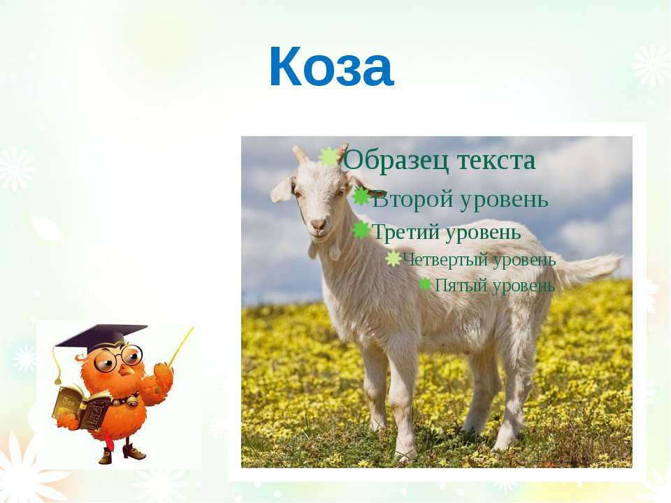 Коза Вознюк Тетяна Василівна