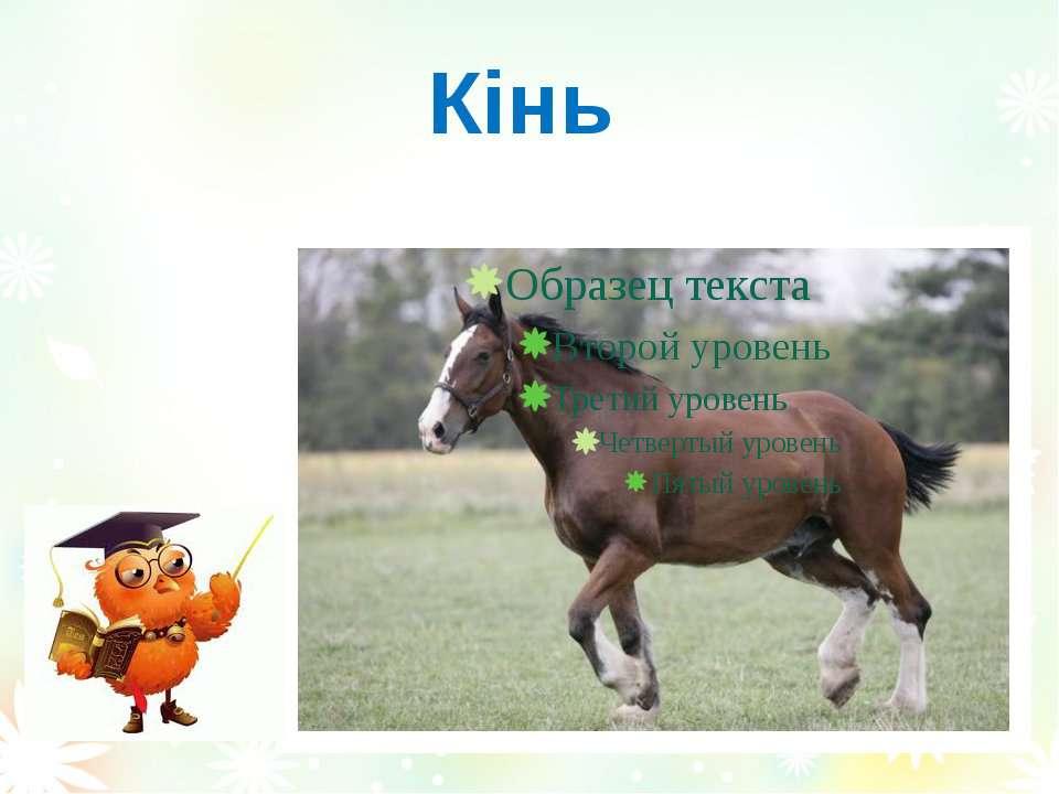 Кінь Вознюк Тетяна Василівна